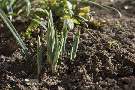 Why Is Friable Soil so Important?