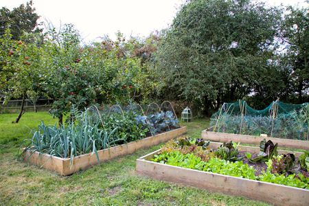 Raised Beds With Vegetables Getty Images