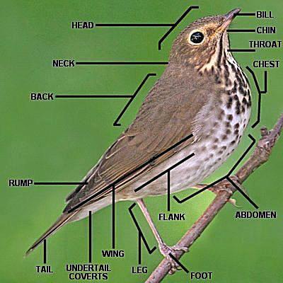 parts of a bird bird anatomy with diagram