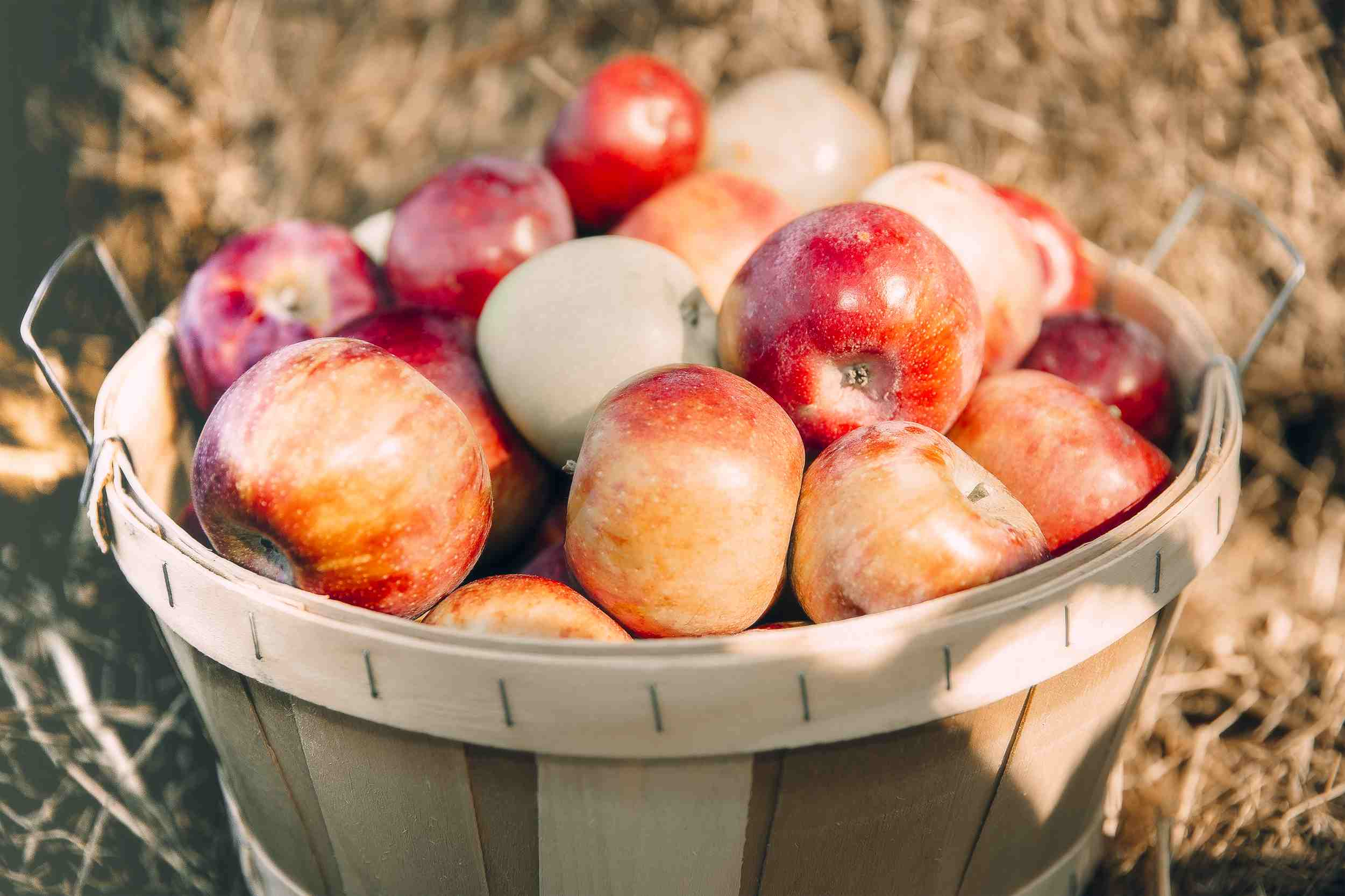 Basket of apples on the ground