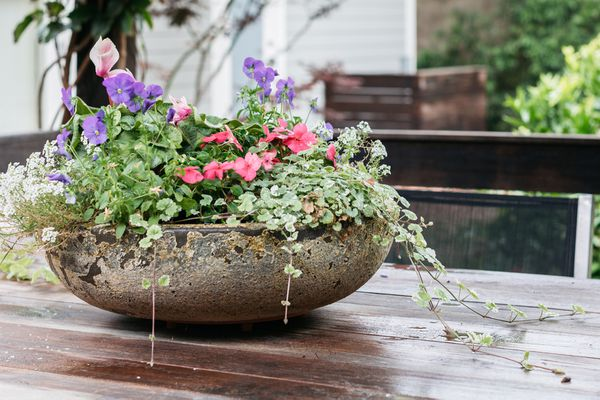 outdoor container plant arrangement