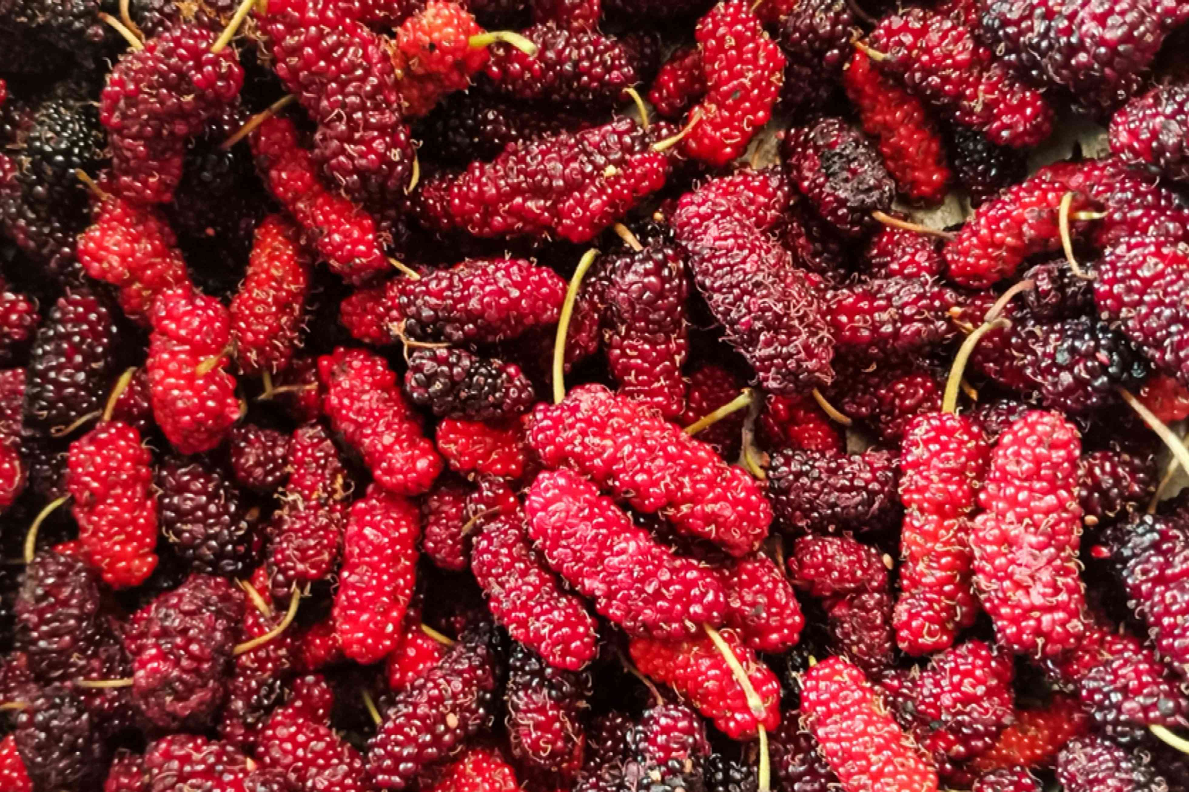 Bright and dark red mulberry berries stacked on each other closeup