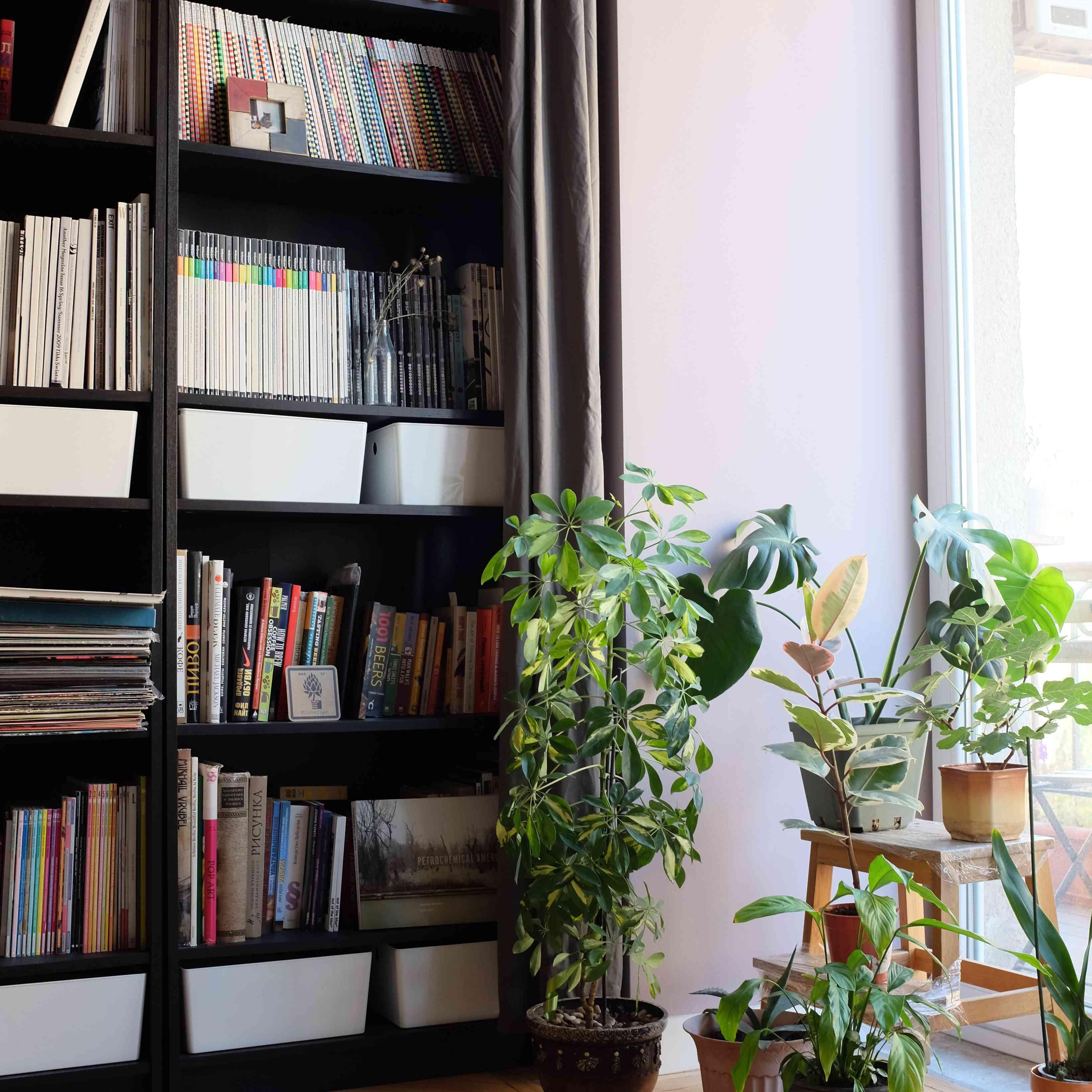 plants and magazines on a bookshelf