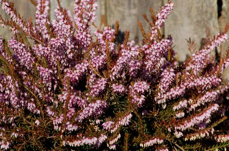 perennials shrubs and trees to grow in acid soil