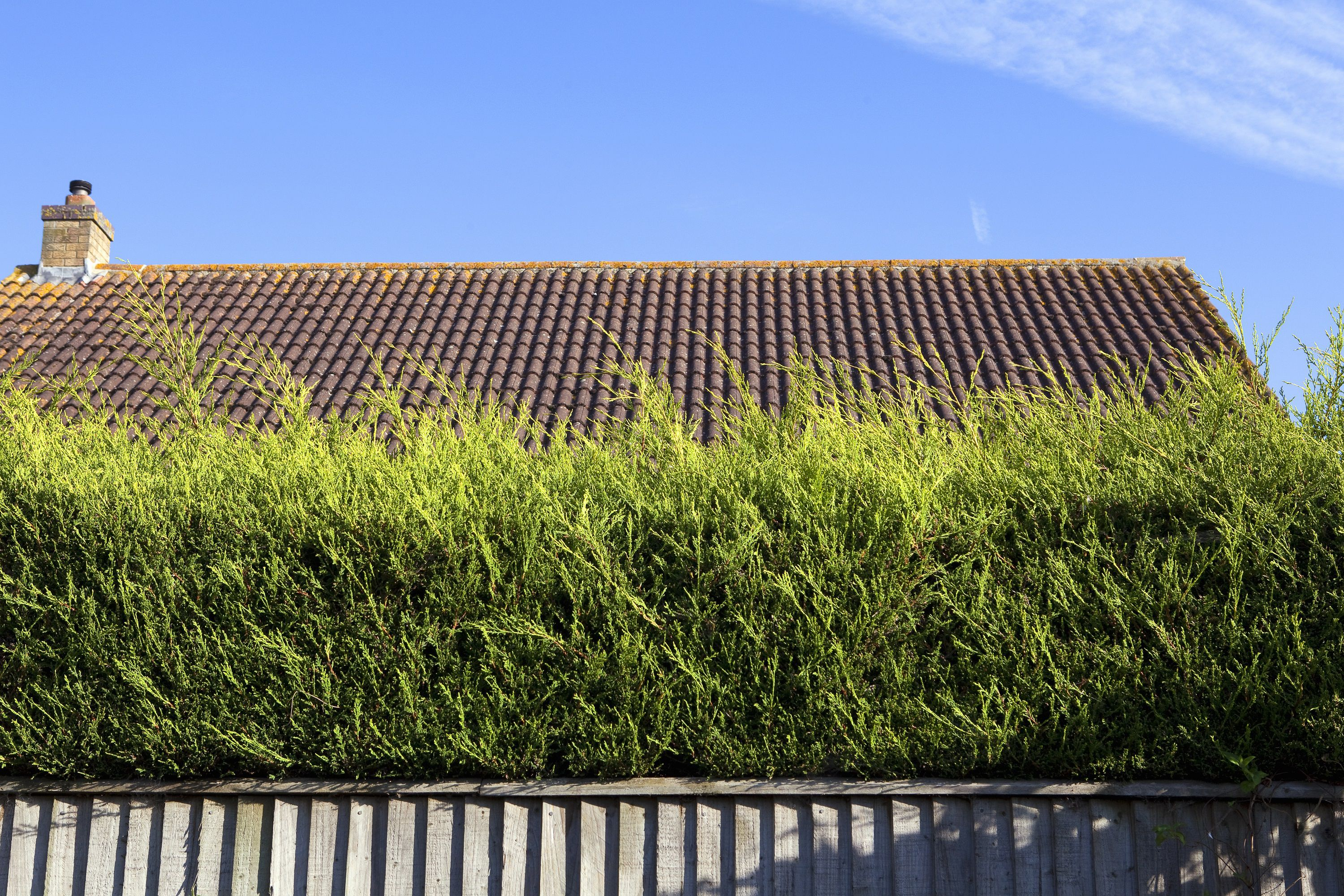 fence with shrubs
