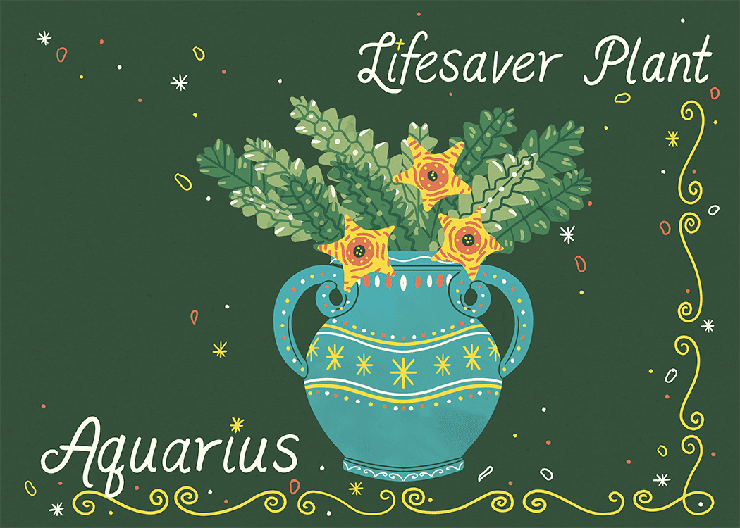 aquarius lifesaver plant illustration