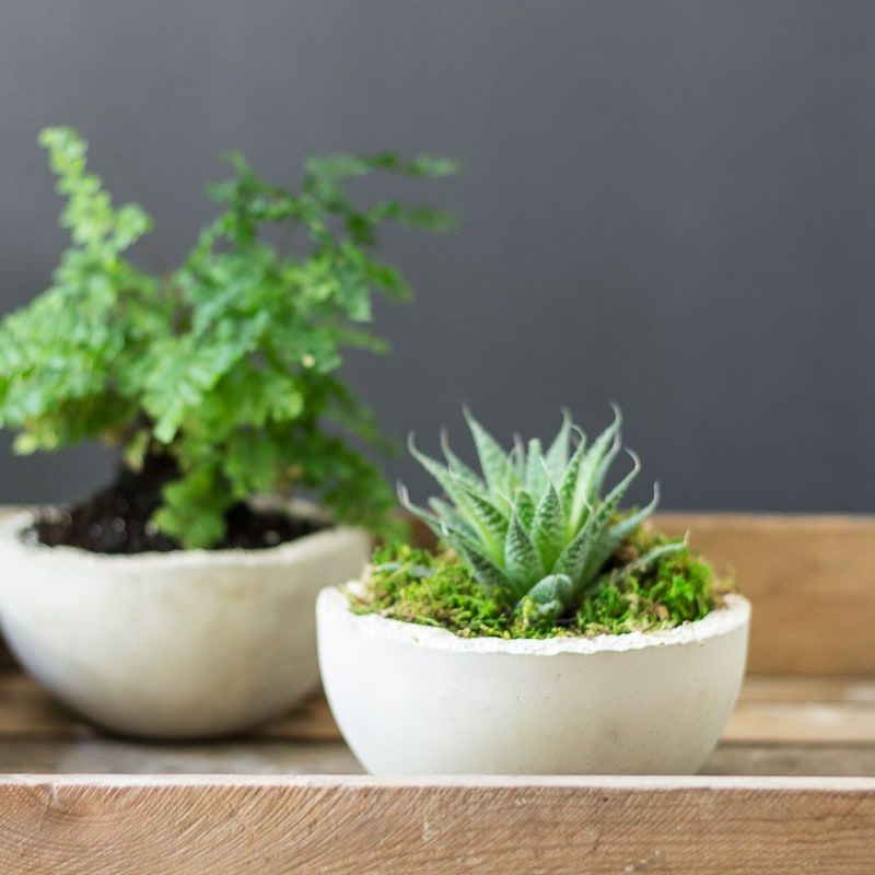 Two concrete planters with plants