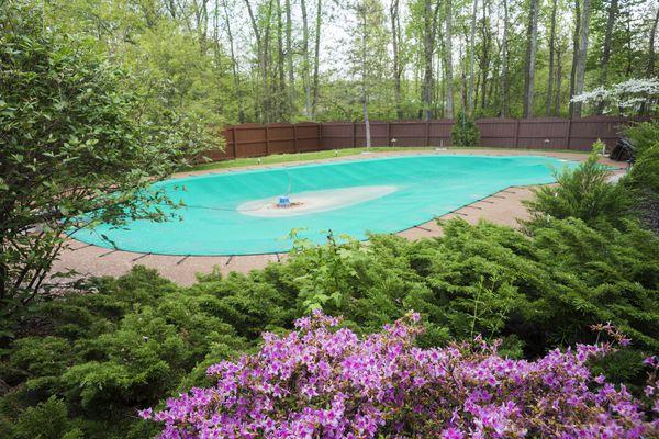 Spring time with flowers around inground pool