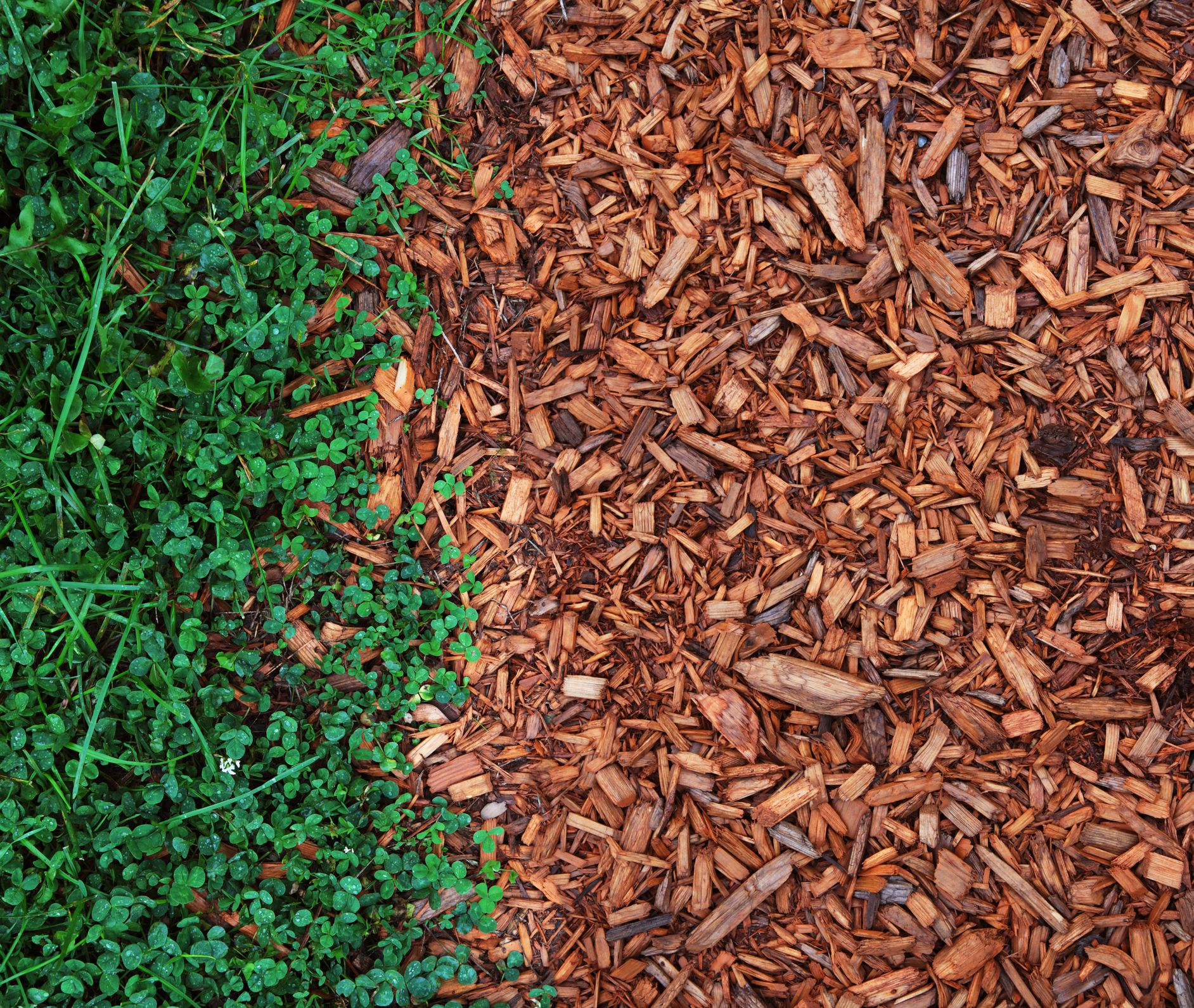Natural Vs Colored Mulch Which Do People Prefer
