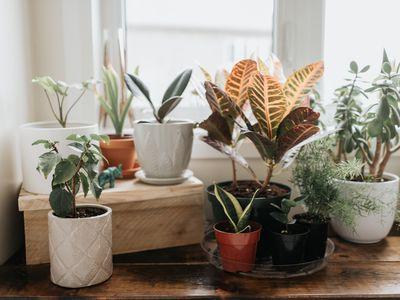 indoor-planters