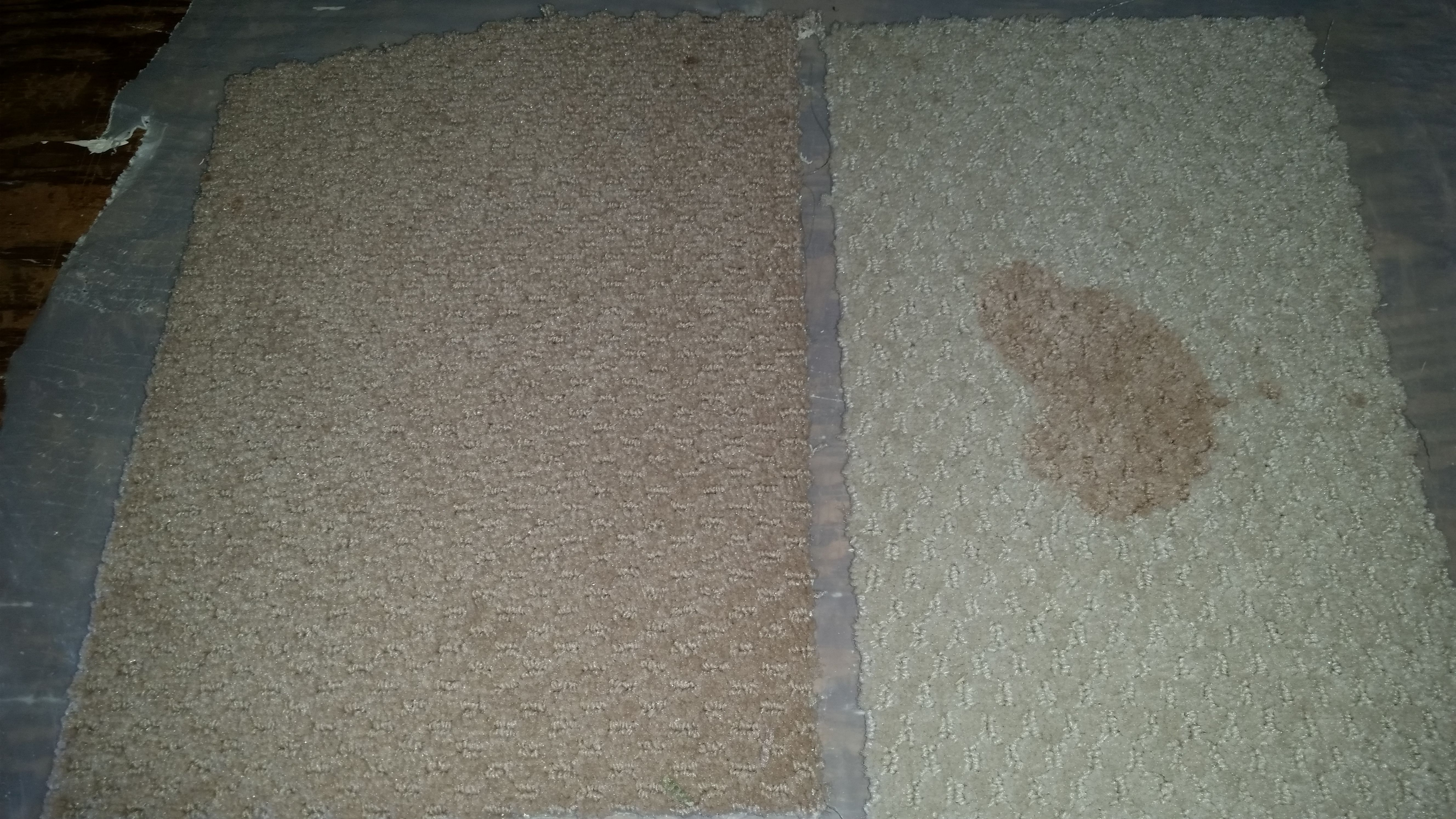Cranberry juice stain on polyester and SmartStrand triexta carpets