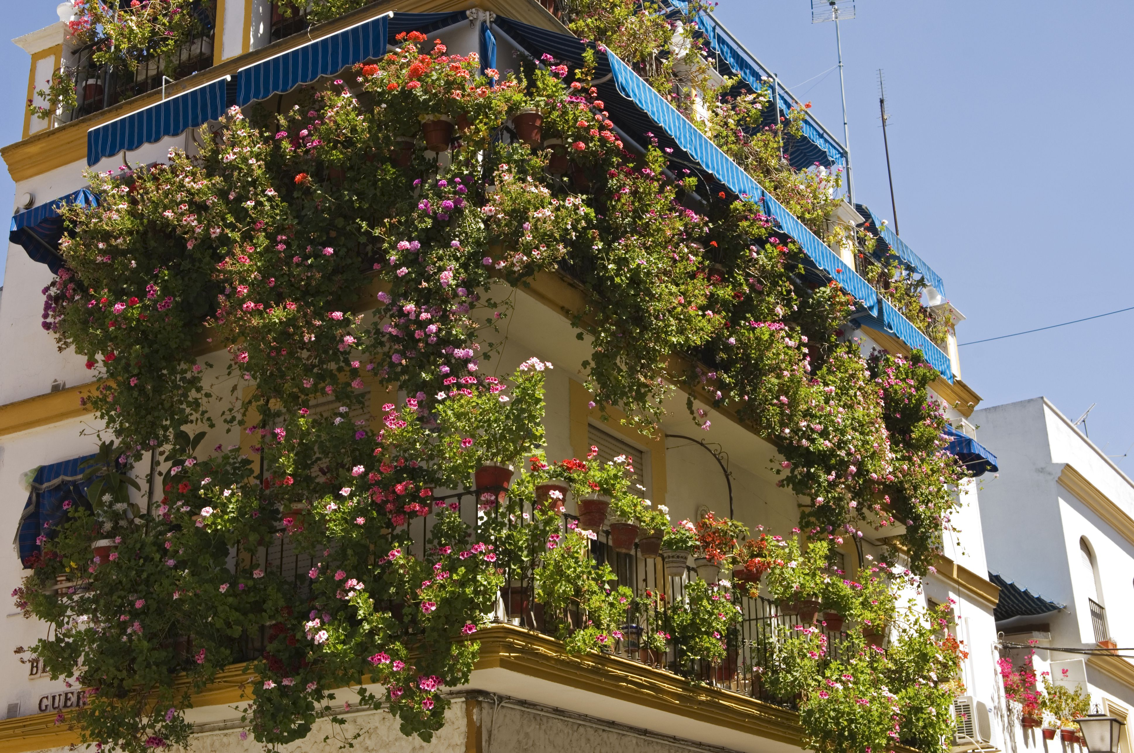 Balcony Flower Gardening for Beginners