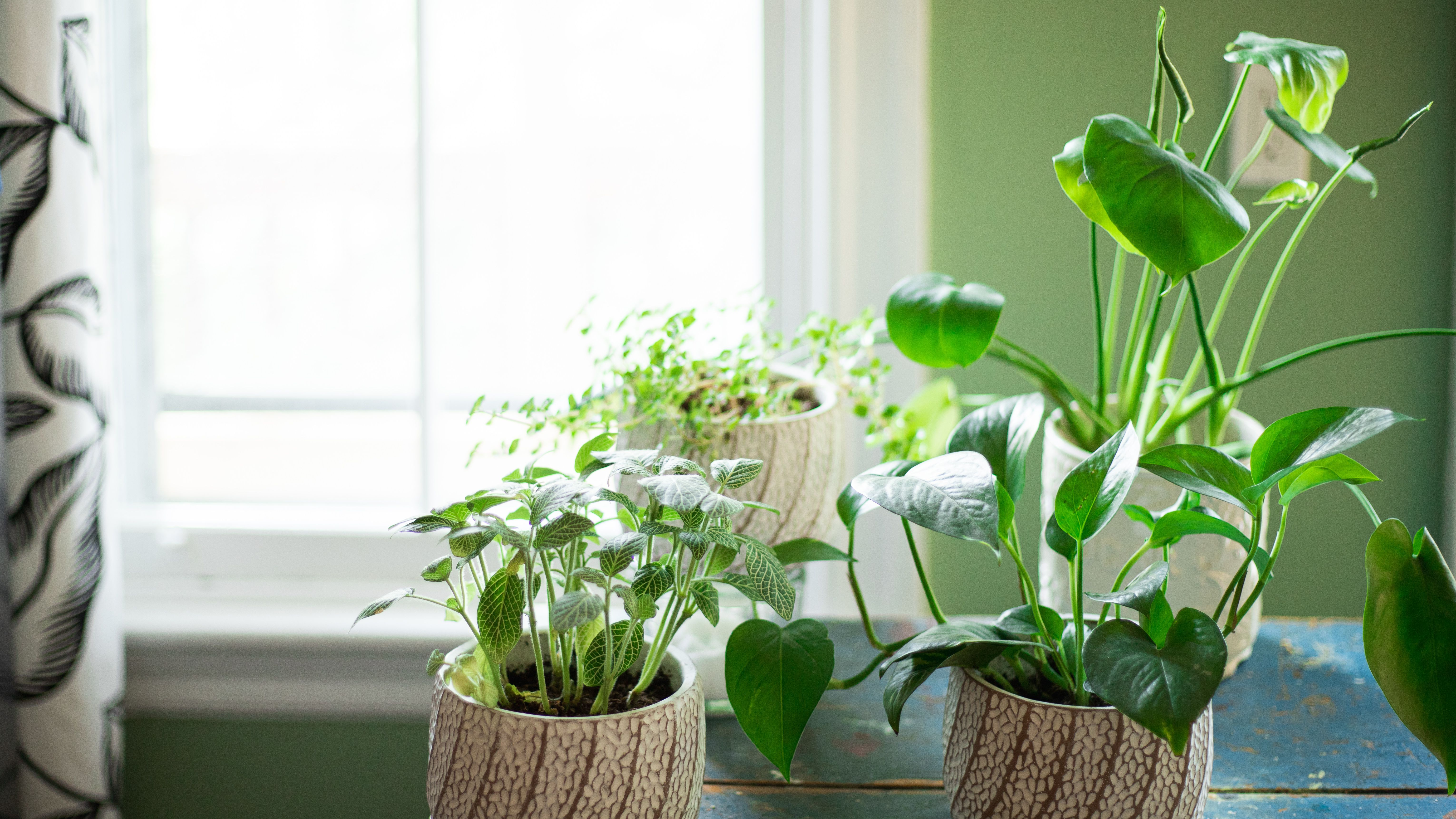 12 Best Houseplants For Sunny Windows,New York Times Travel Ban To Europe