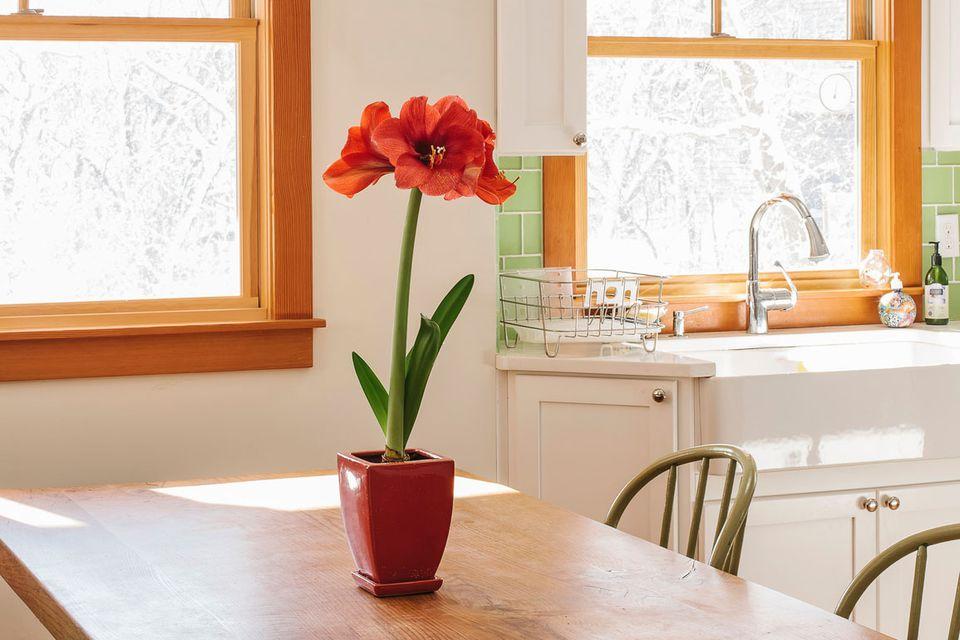 amarilis en una mesa de cocina