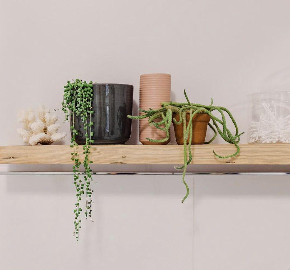 shelf with plants on it
