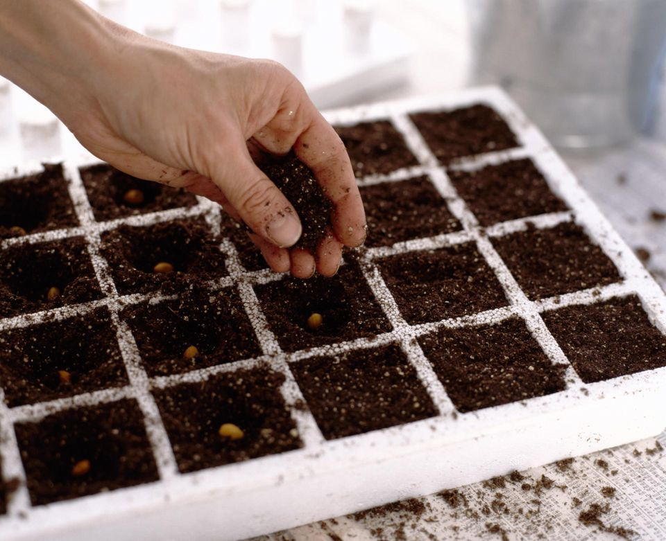 Person planting seeds