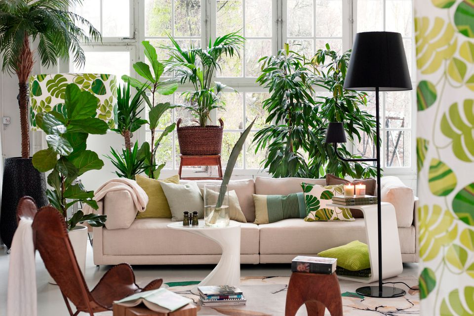 plant lover's paradise