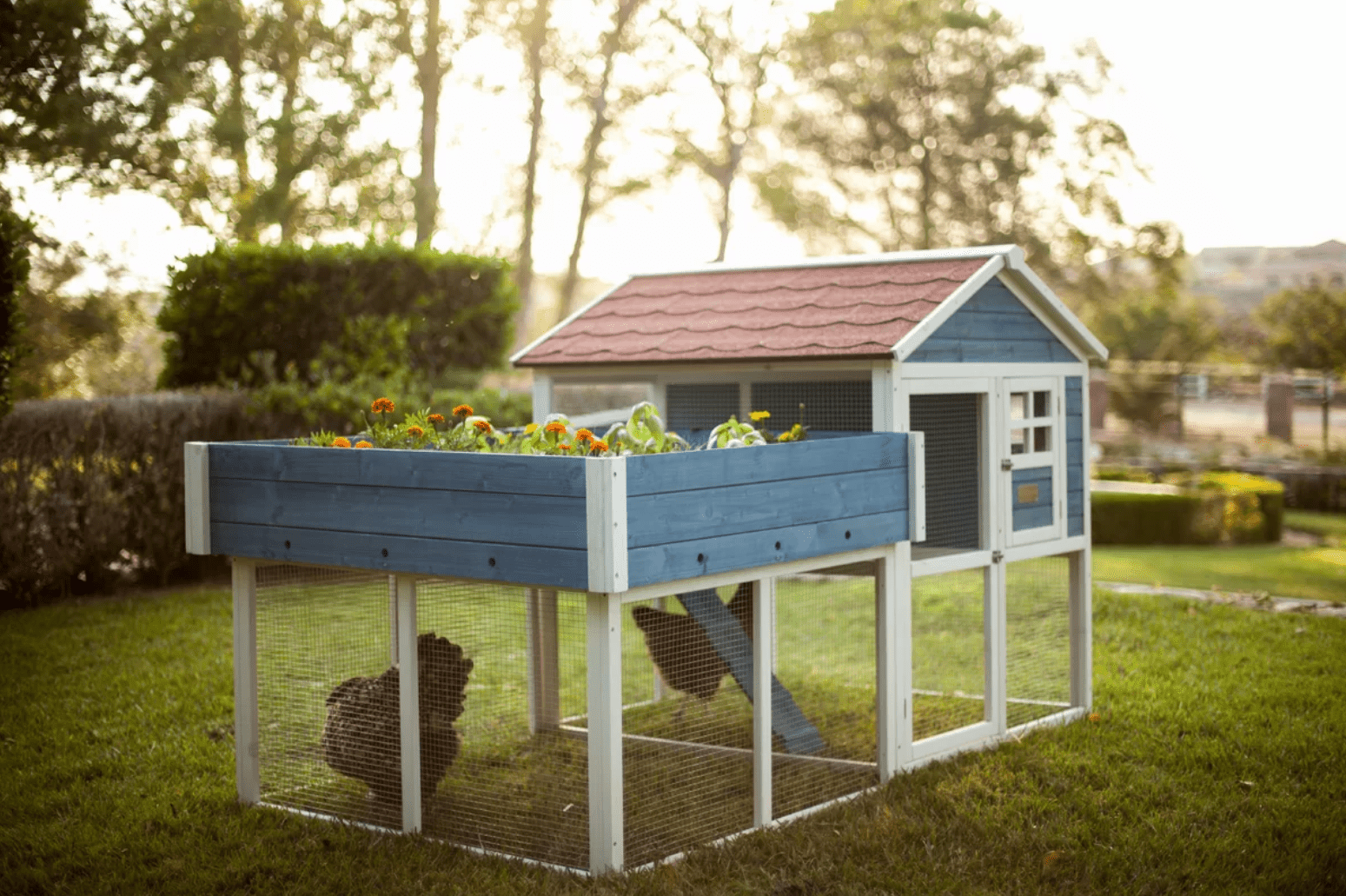 The 7 Best Chicken Coops Of 2019