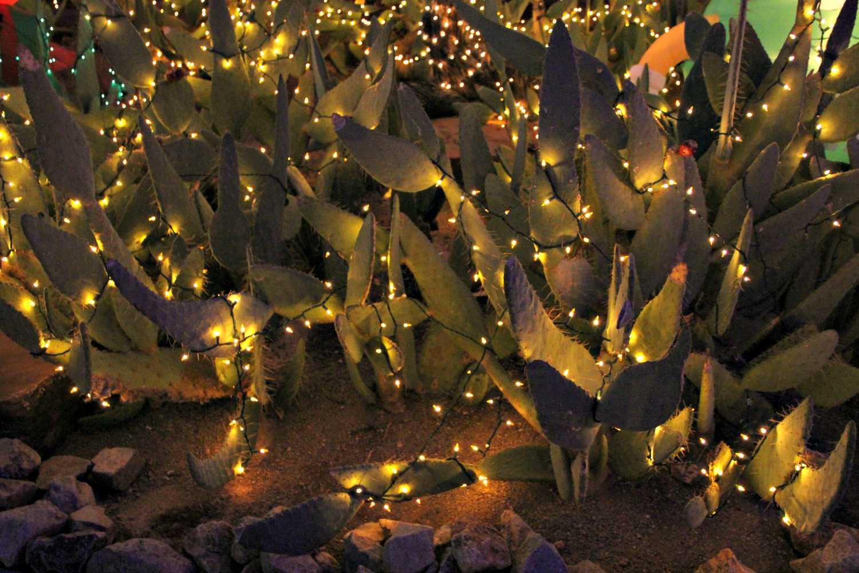 Cacti illuminated with string lights