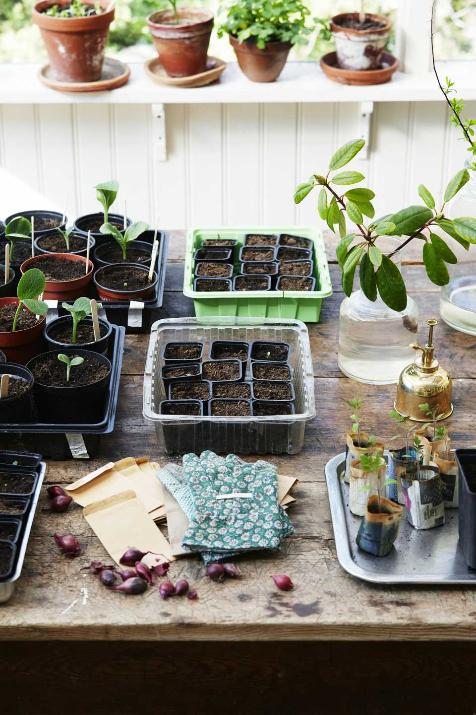 A selection of potted plants and work gloves