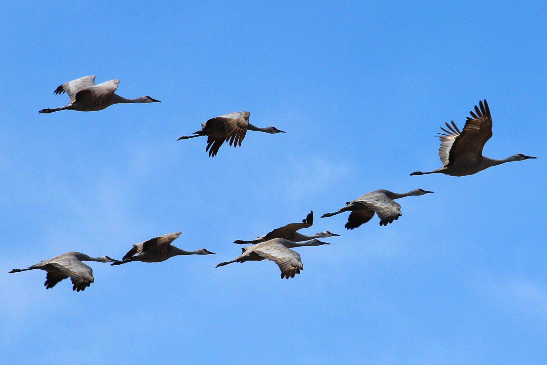 Bird Flight Patterns Custom Design Inspiration