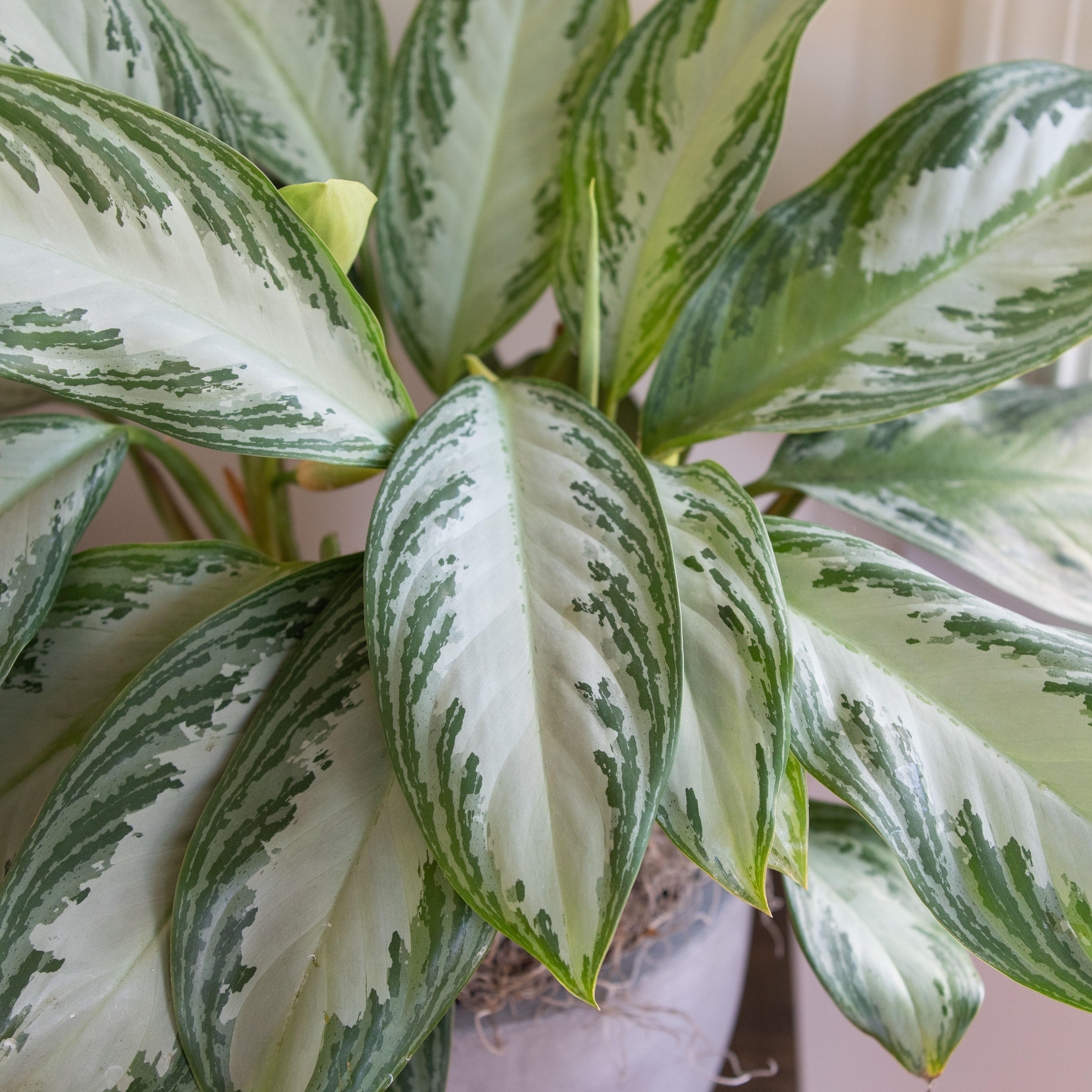 12 Houseplants Anyone Can Grow