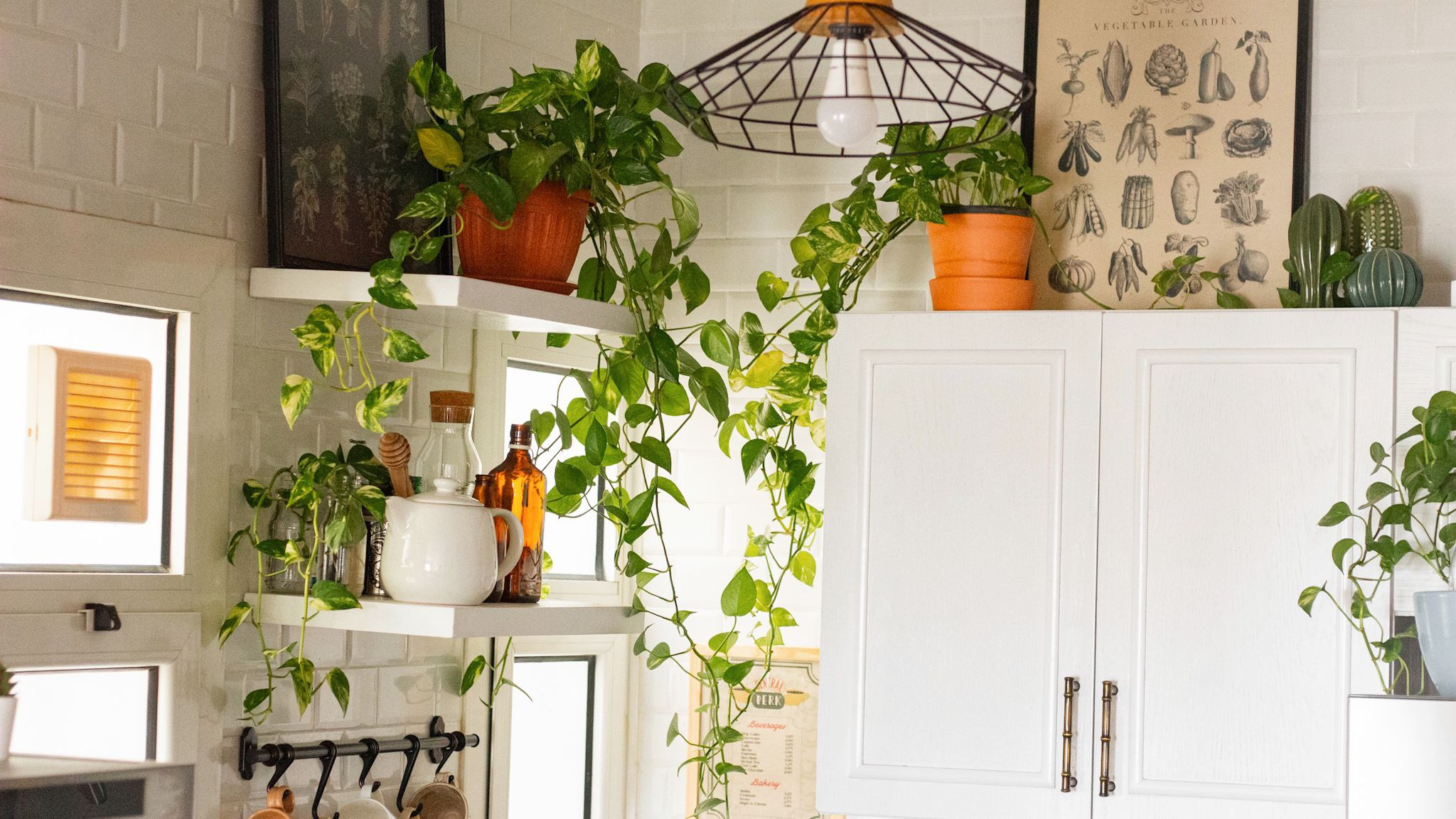 10 Houseplants That Will Thrive in Your Kitchen
