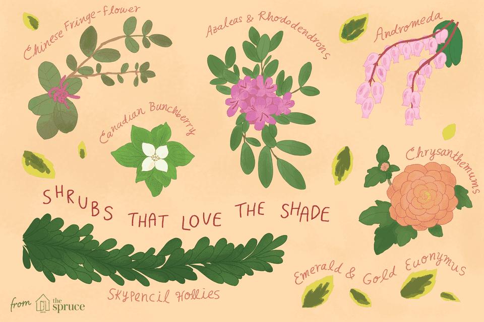 shrubs that love the shade