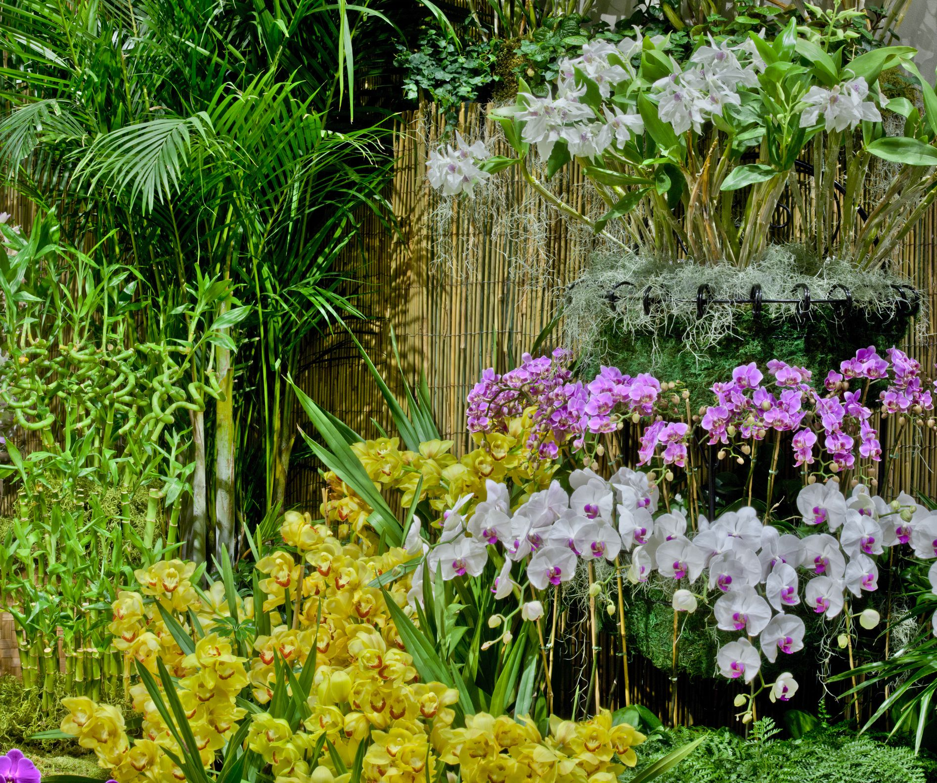 Outdoor Orchid Collection