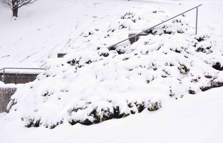 Heavy snow covering creeping juniper