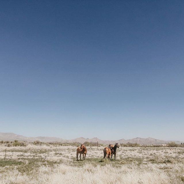 Desert with horses