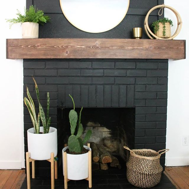 Black fireplace with cactus plants