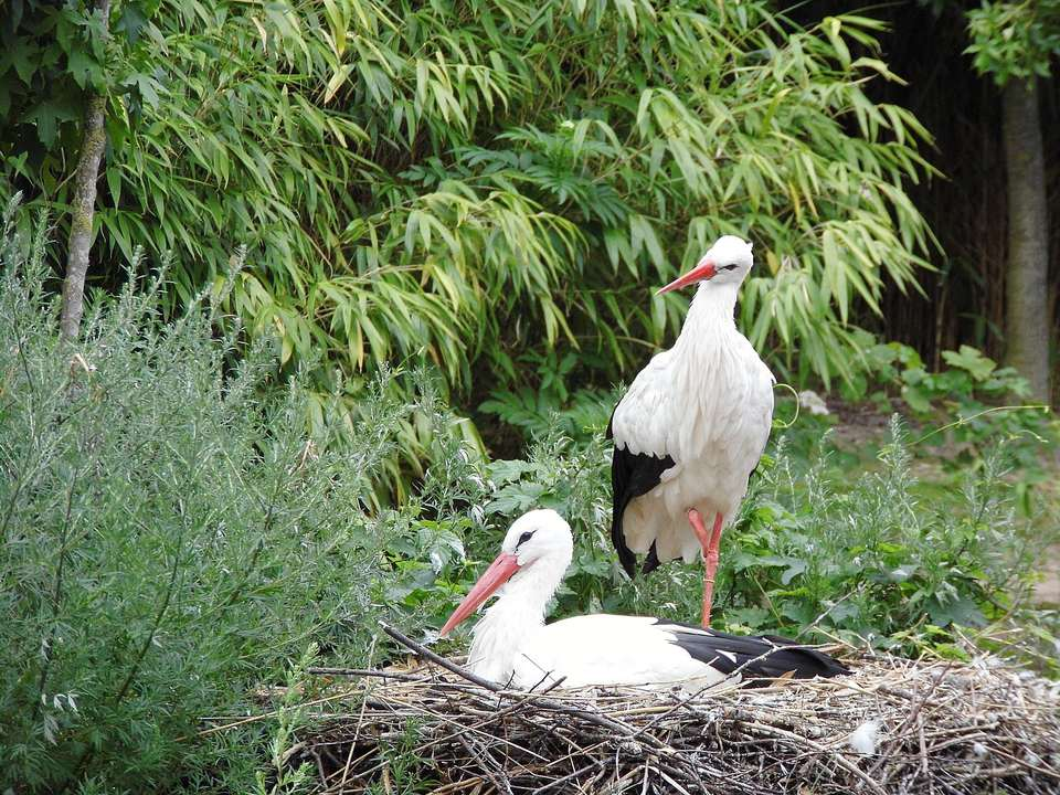 Storks on Nest Against Trees