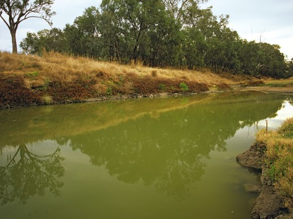 Green water indicating eutrophication and excessive algae growth