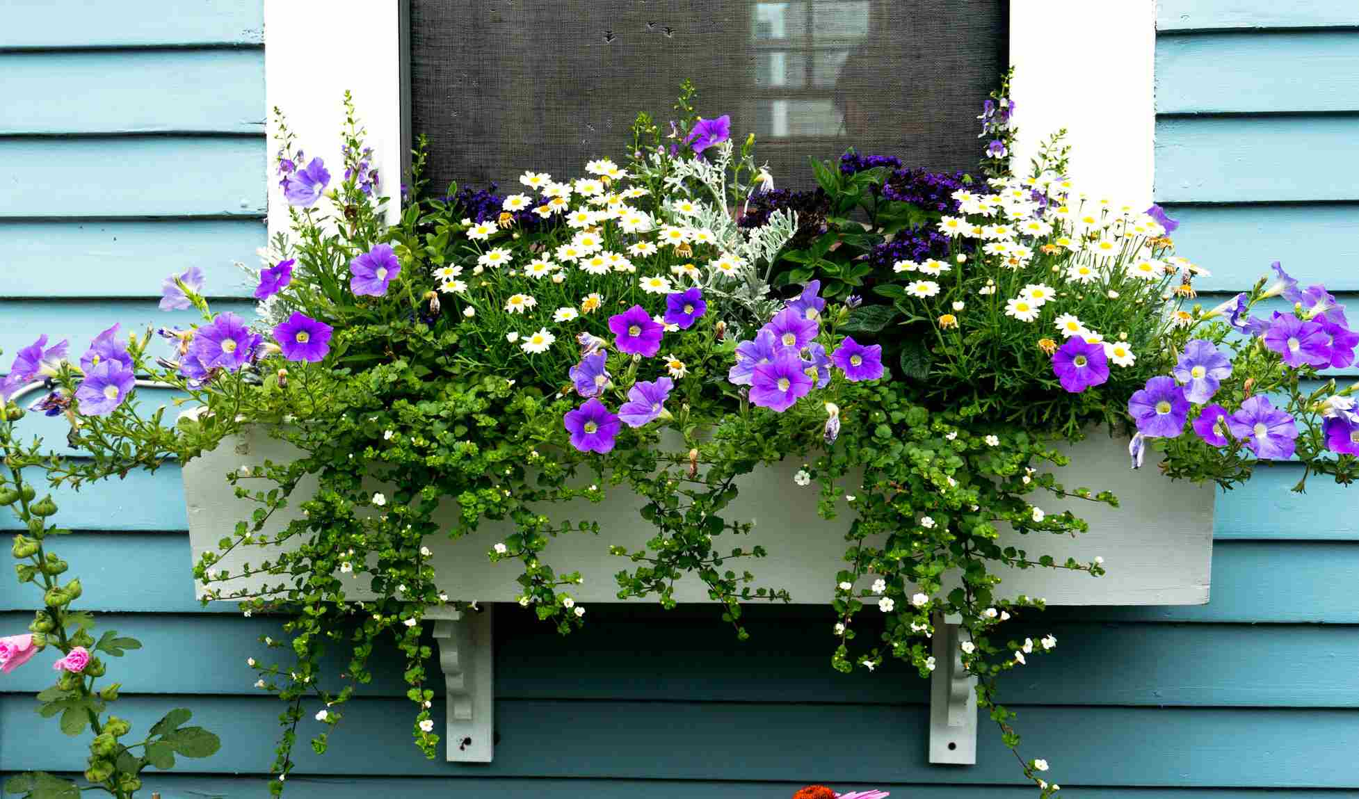 spring window box with purple and white flowers