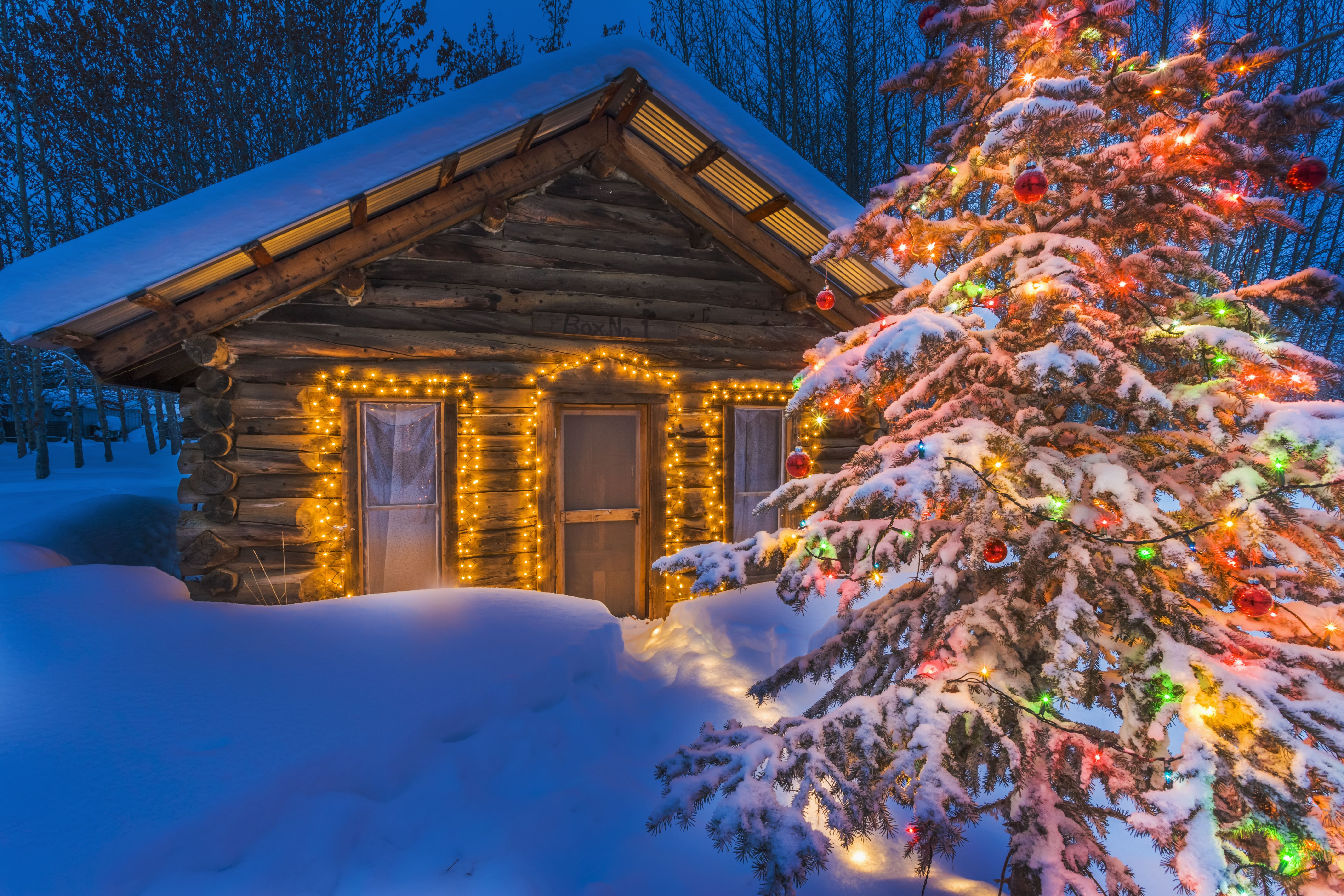 small one-story cabin outlined in colored lights with a fir tree in colored lights in the foreground