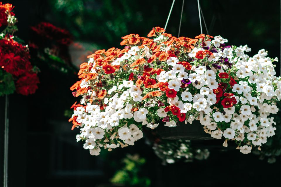 million bells in a hanging basket