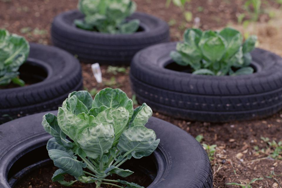 Health Considerations When Using Tires For Raised Bed Gardening