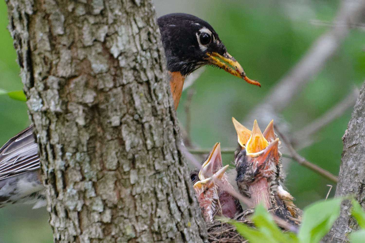 12 Things You Didn't Know About Baby Birds