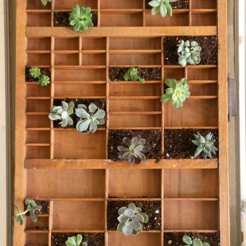 Letterpress drawer with succulents