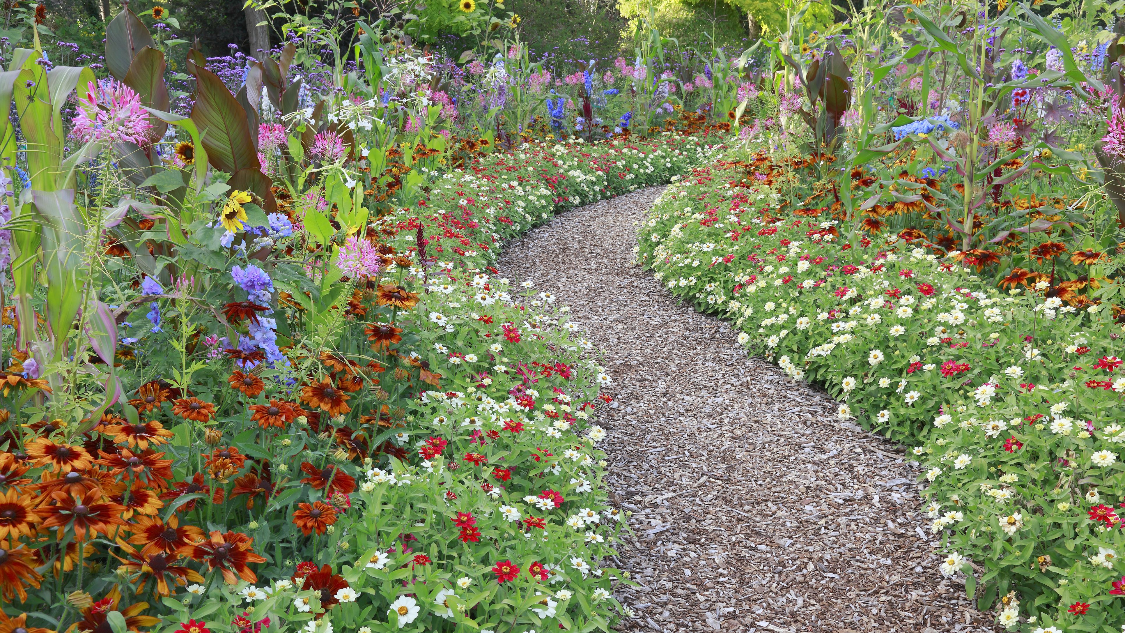 How To Cut Back And Thin Perennial Plants
