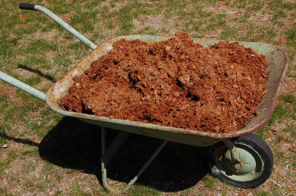coir mulch in wheelbarrow.