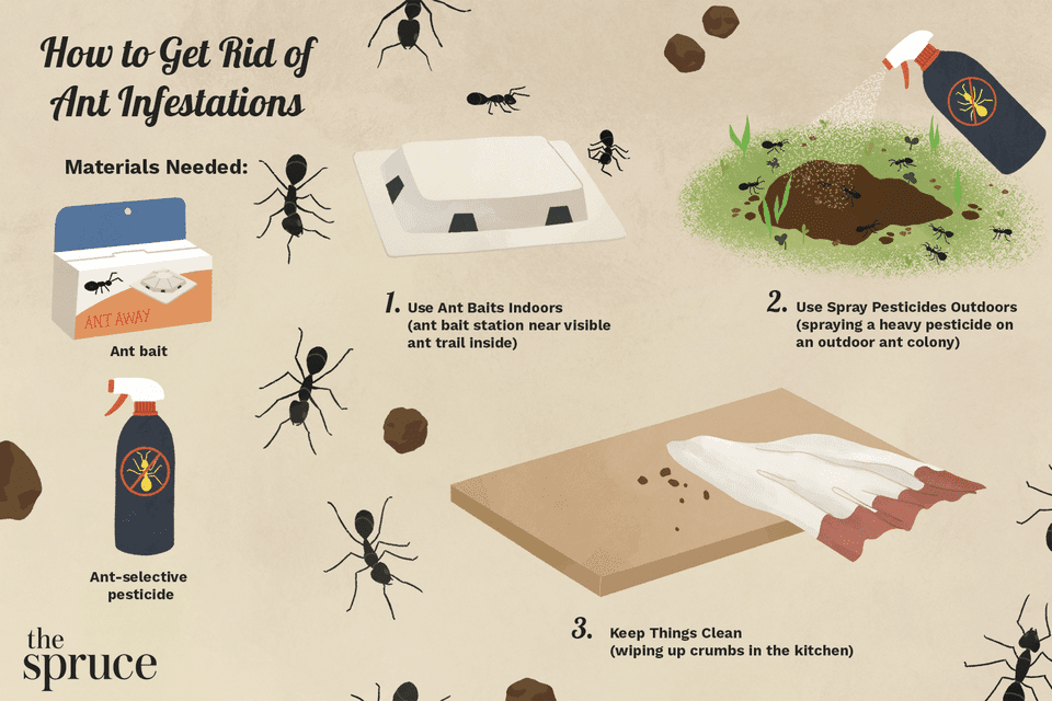 How to Get Rid of Ant Infestations