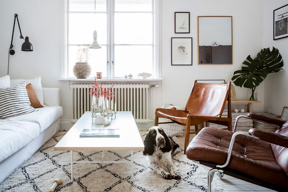 small scandi styled living room dog white rug