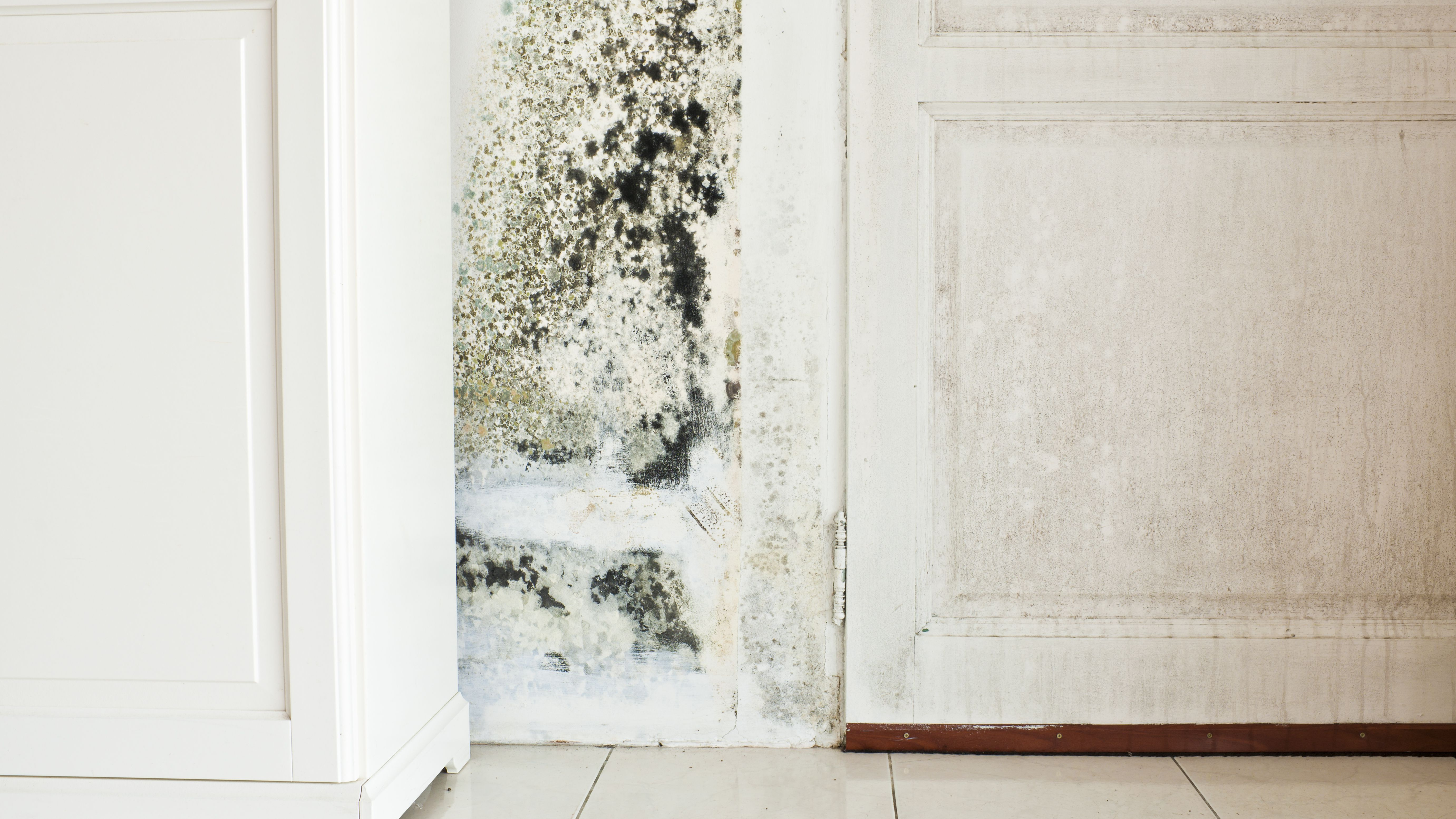 how to avoid dangerous mold growth in the laundry room