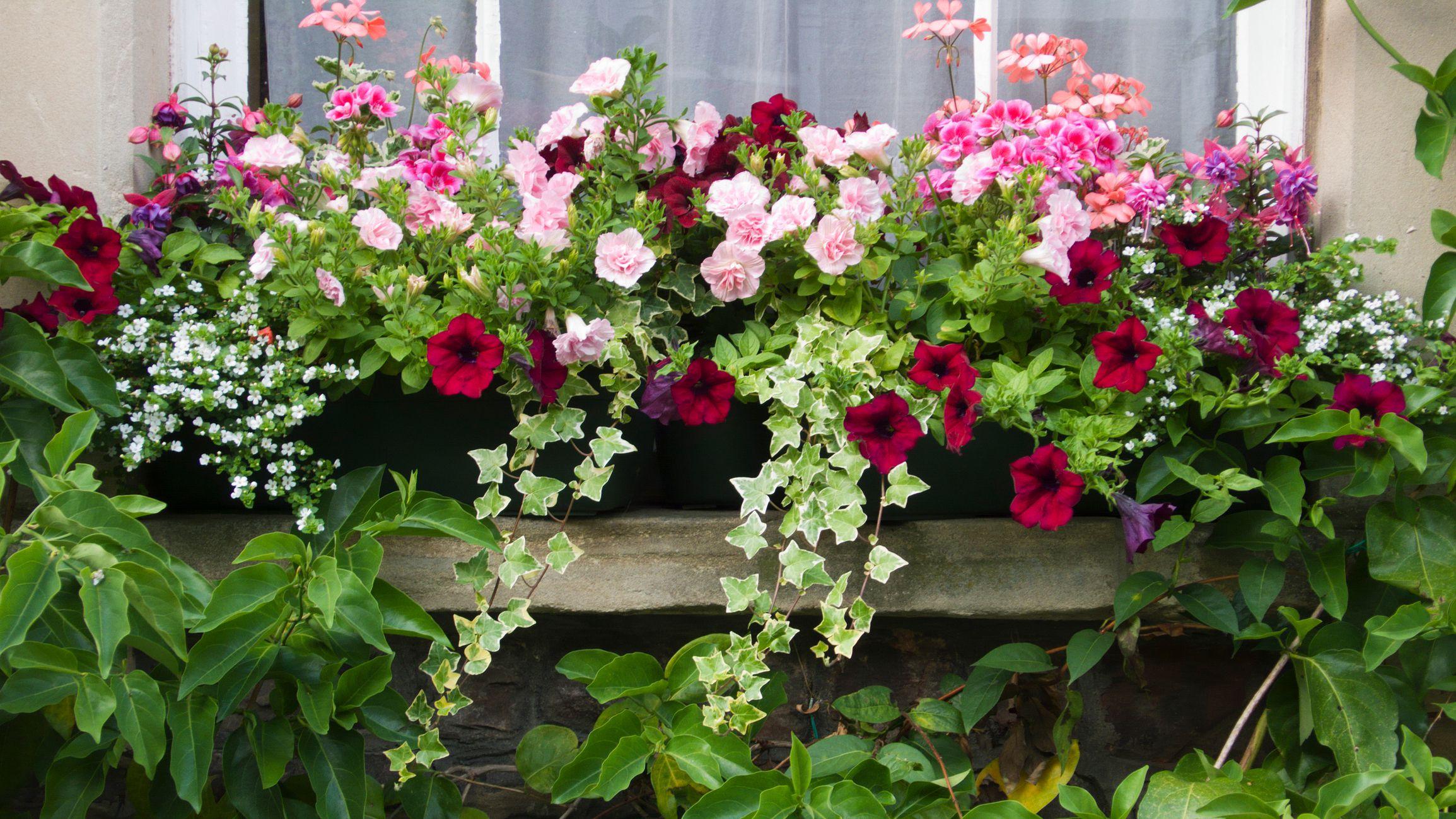 Top 7 flowering container garden plants for sunny spots izmirmasajfo