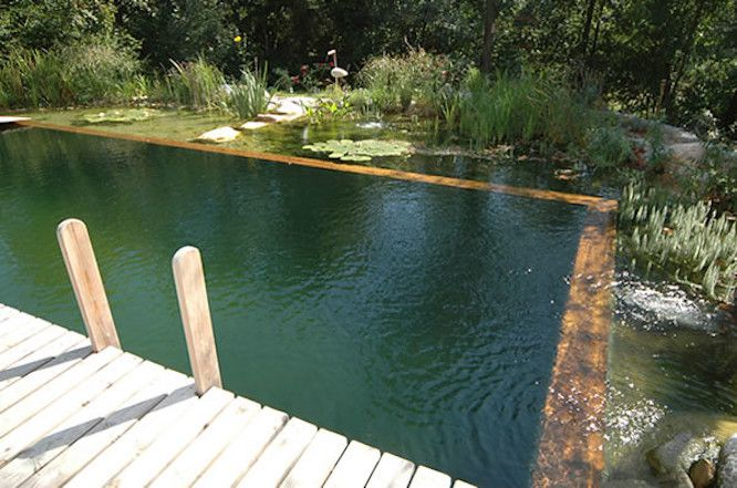 Natural pool edged by wooden deck and water plants including lily pads
