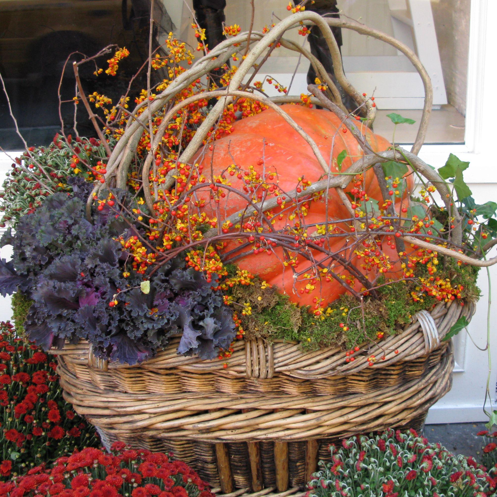 cabbage branches basket mum container garden