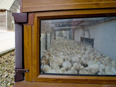 Build a Brooder for Baby Chicks