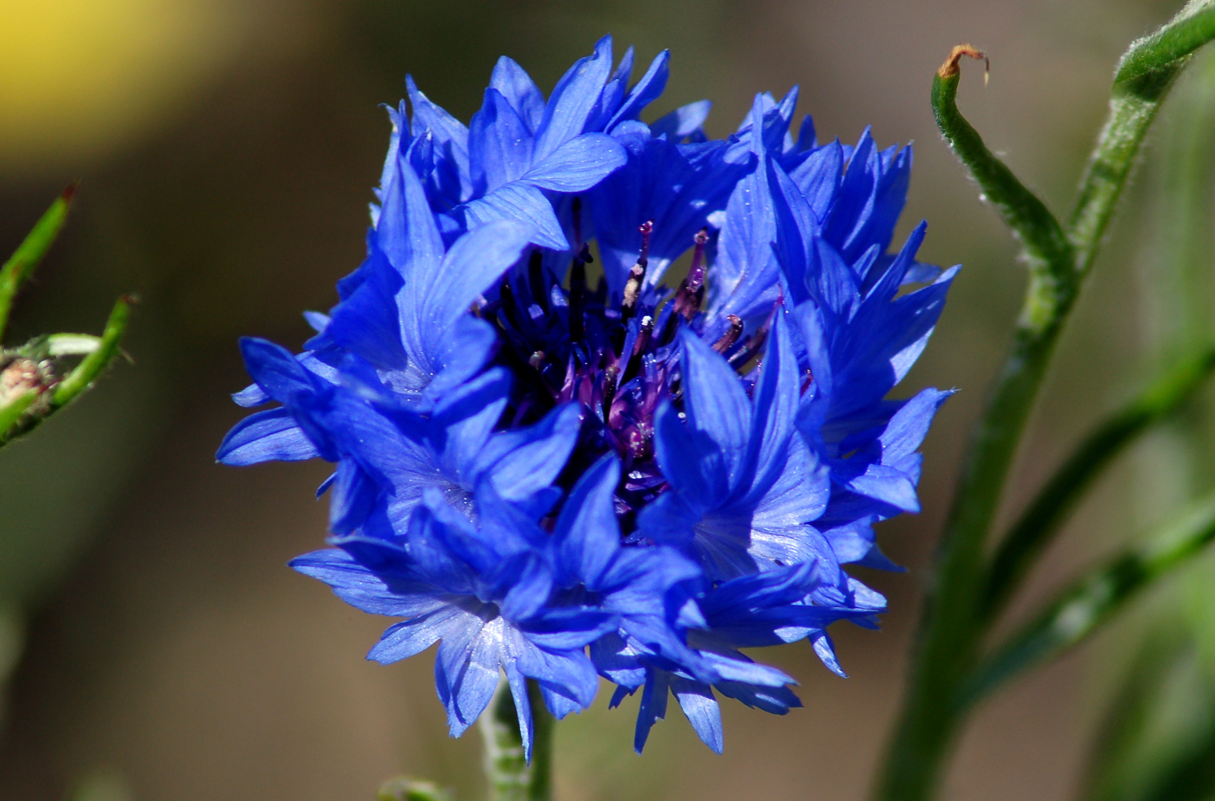 Pictures Of Blue Flowers